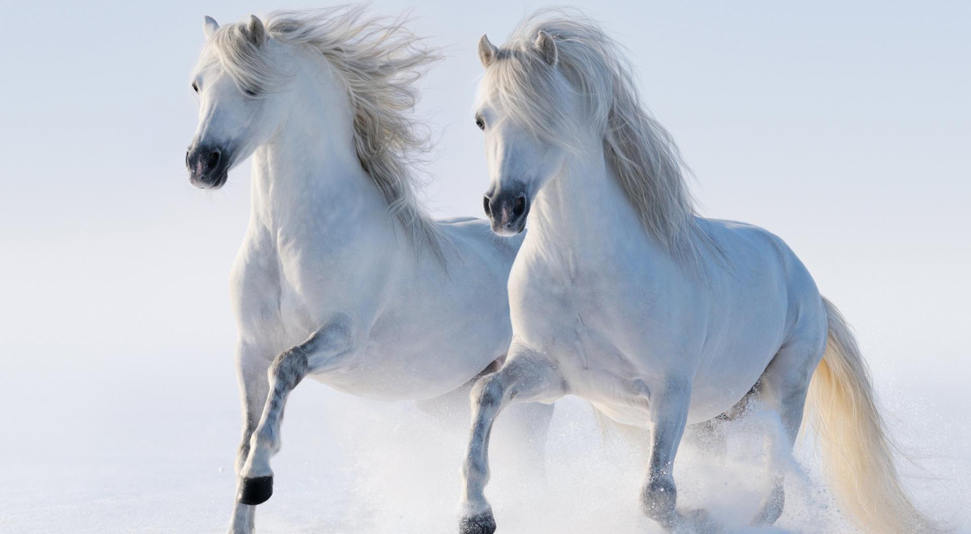 Caballos Fondos De Pantalla Horses Wallpapers Hd