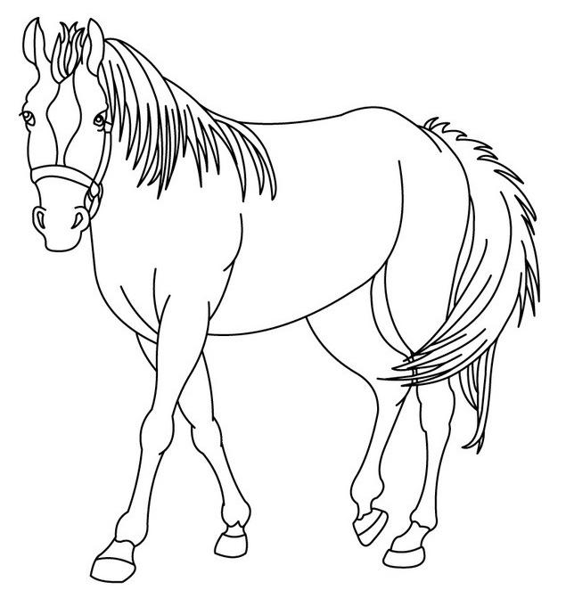 caballos-dibujos-para-imprimir