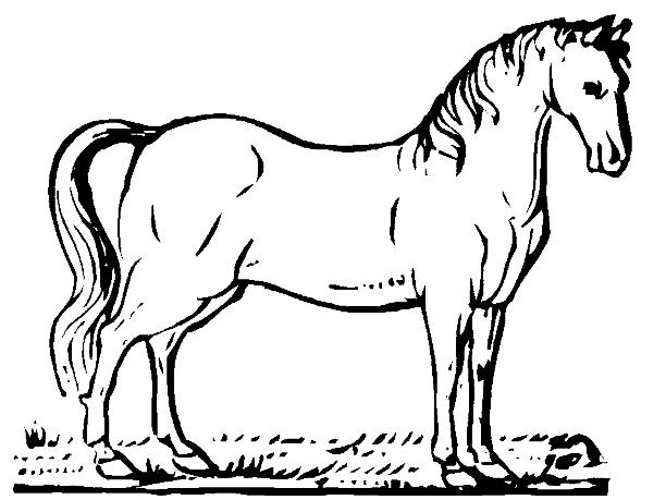 caballos-faciles-para-pintar