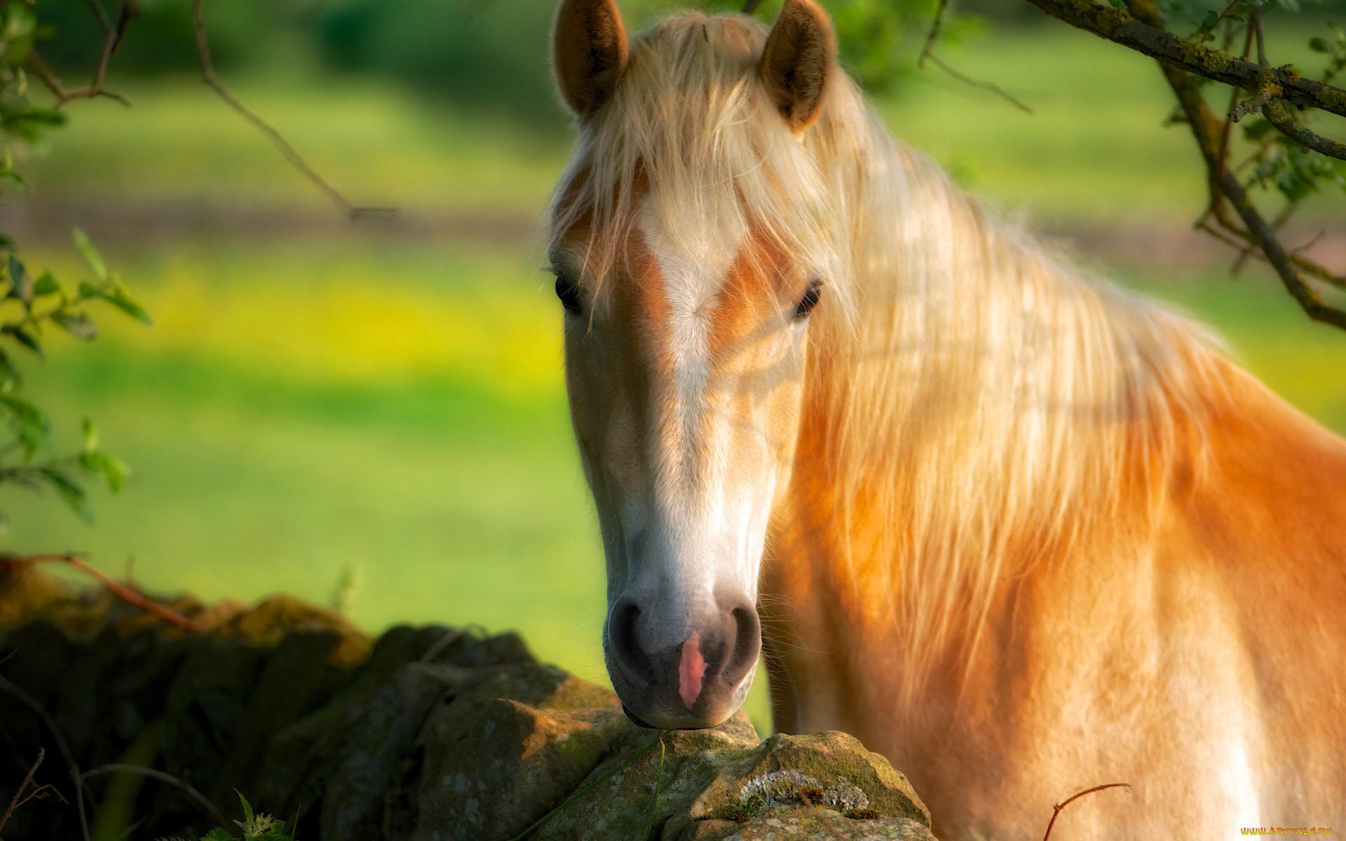 Fondos De Pantalla Carreras Proibidas: Caballos Fondos De Pantalla, Horses Wallpapers Hd