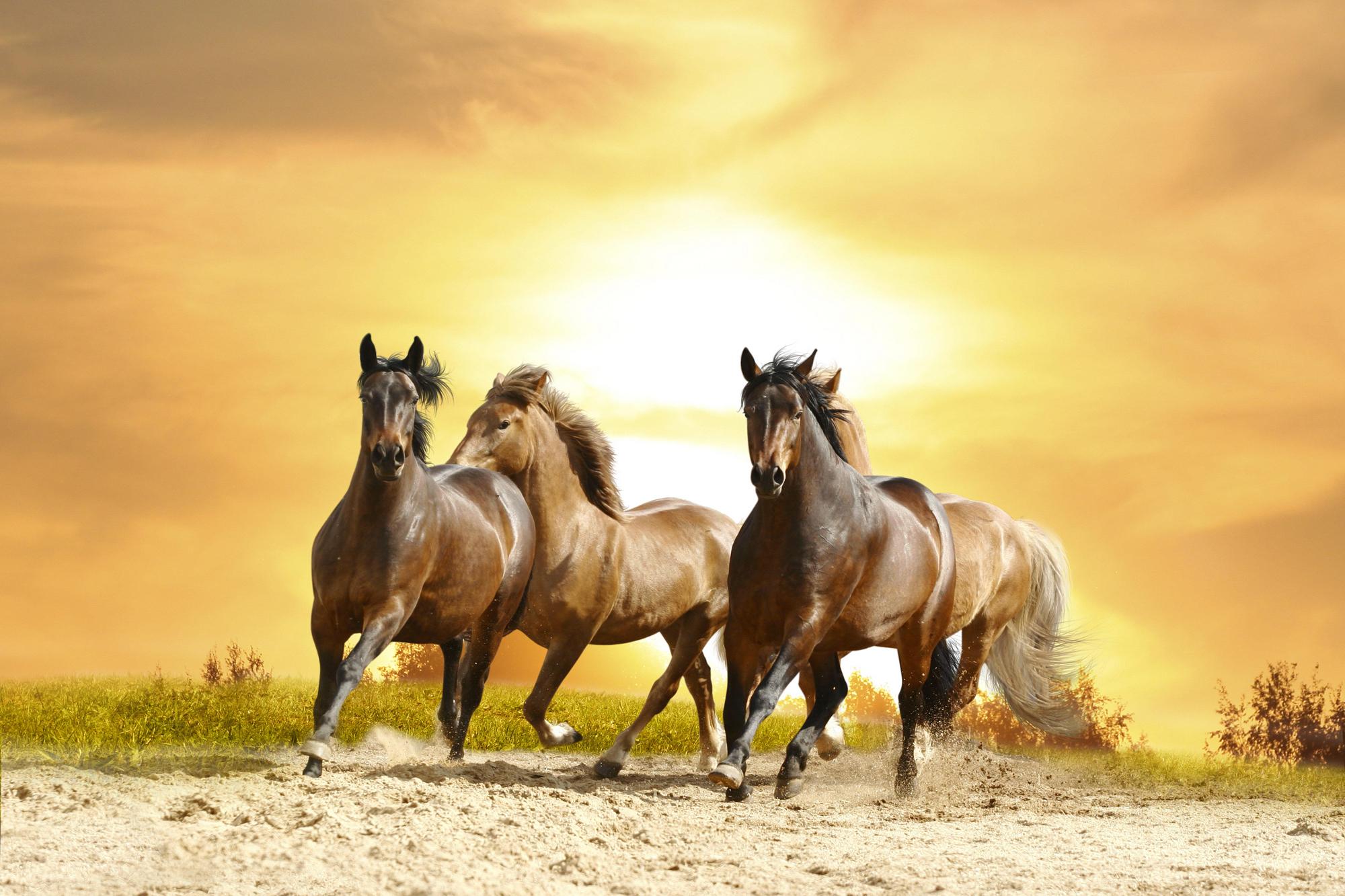 Caballos Fondos De Pantalla, Horses Wallpapers Hd