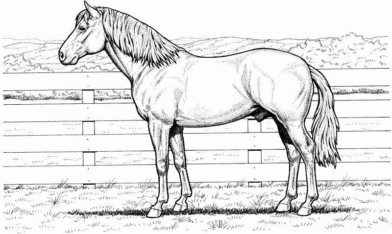 caballos-para-colorear