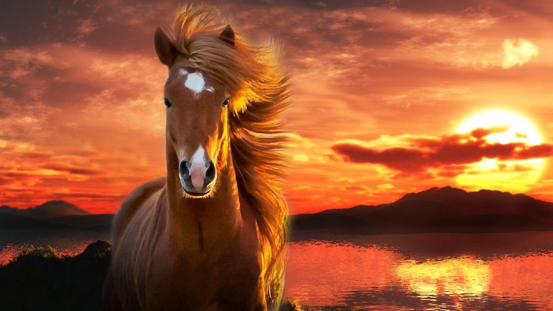 caballos fondos de pantalla horses wallpapers hd. Black Bedroom Furniture Sets. Home Design Ideas