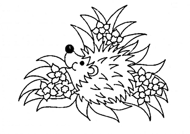 dibujo-animal-erizo-para-colorear