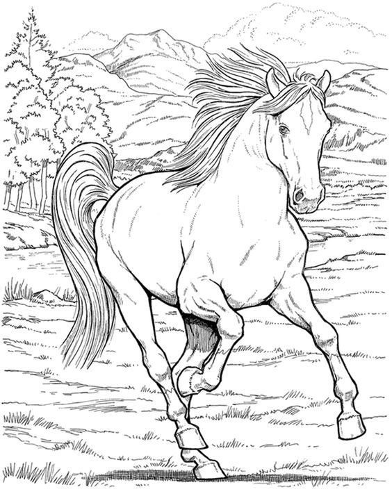 dibujos-caballos-bellos