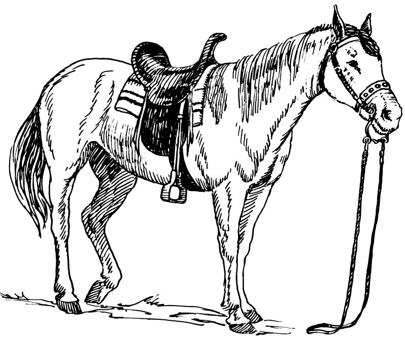 Dibujos de caballos para colorear e imprimir gratis, caballos para