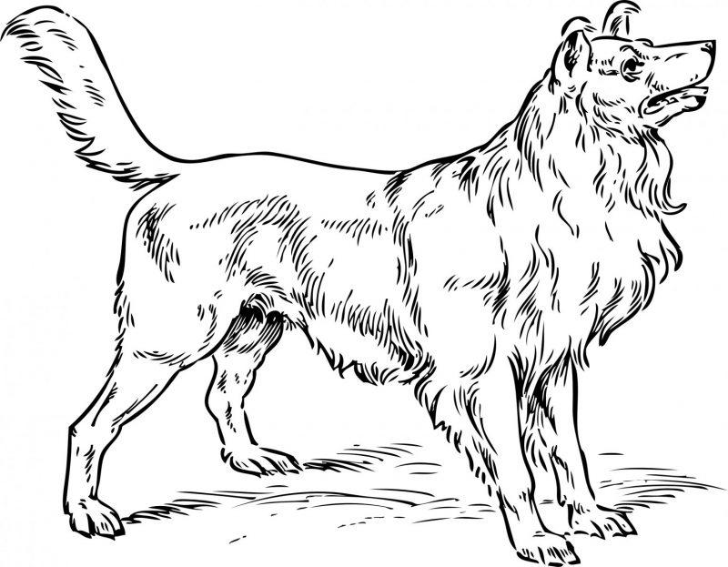 dibujos-de-perros-colorear (1)
