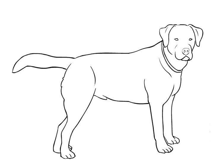 Dibujos Para Colorear De Cachorros De Perros: Dibujos De Perros Para Colorear E Imprimir Gratis