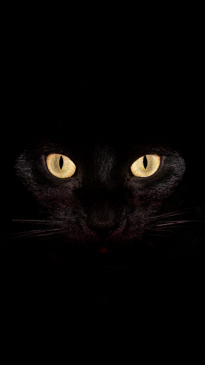 gato-negro-halloween-fondo-movil