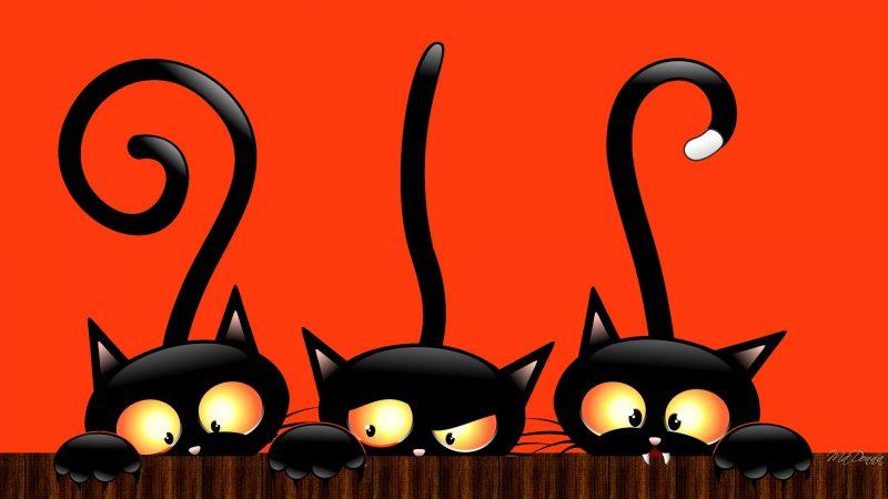 gatos-negros-dia-de-muertos-halloween