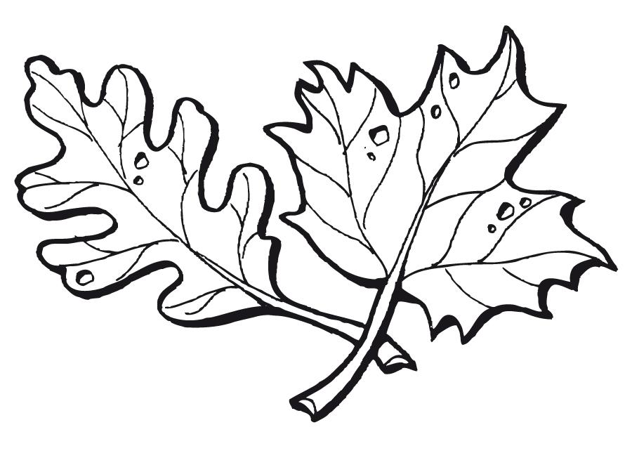 Increíble Dibujos Para Colorear Gratis Para El Otoño Molde - Dibujos ...