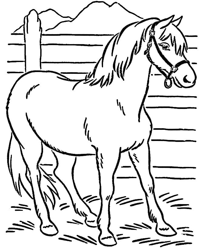 horses-coloring