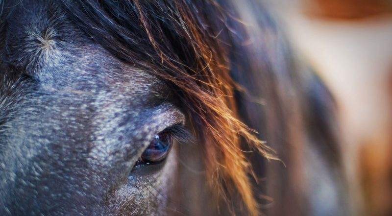 horses-faces-wallpapers