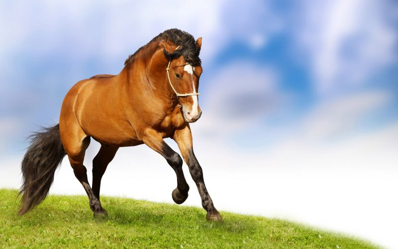 horses-wallpapers-hd