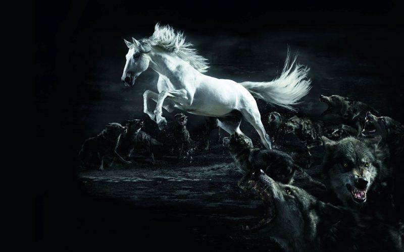 precioso-caballo-blanco-saltando-fondo