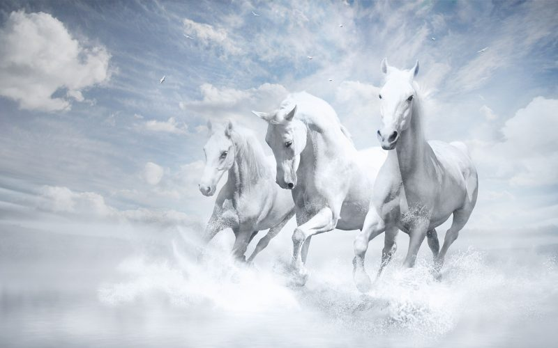white-horses-wallpapers