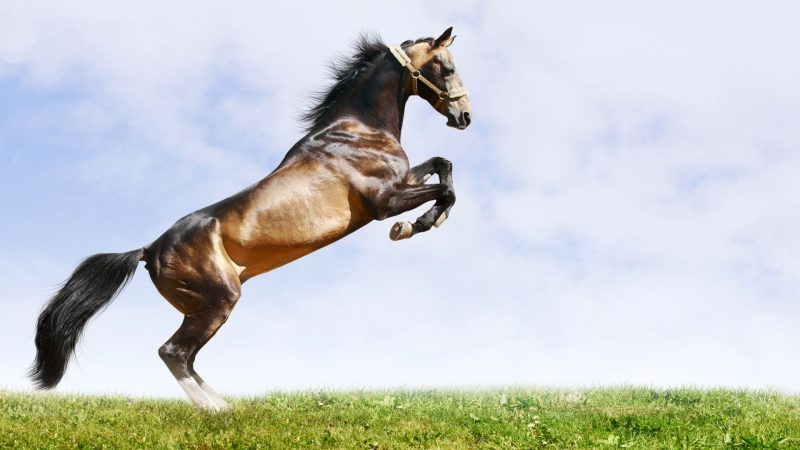wild-horses-wallpapers