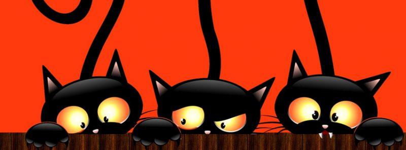 3-gatos-negros-facebook-halloween
