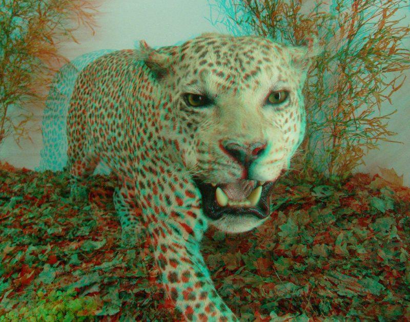 animales-3d-imagenes