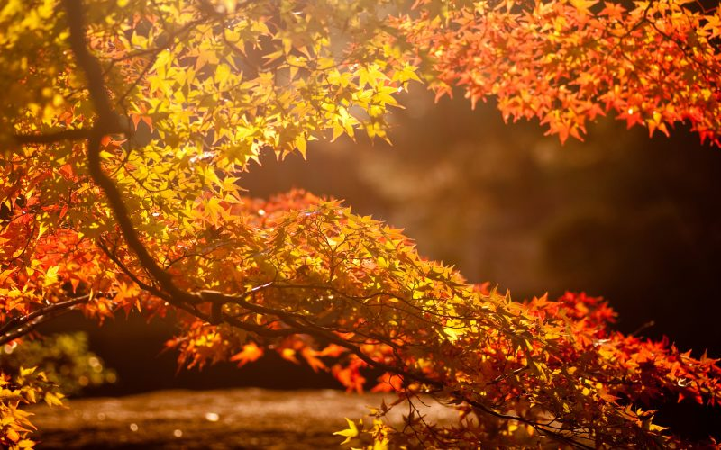 autumn-branches-wallpapers-hd