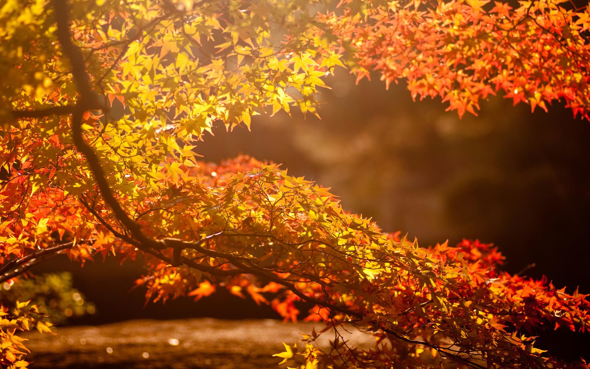 Paisajes de oto o para fondos de pantalla oto o wallpapers for Immagini autunno hd