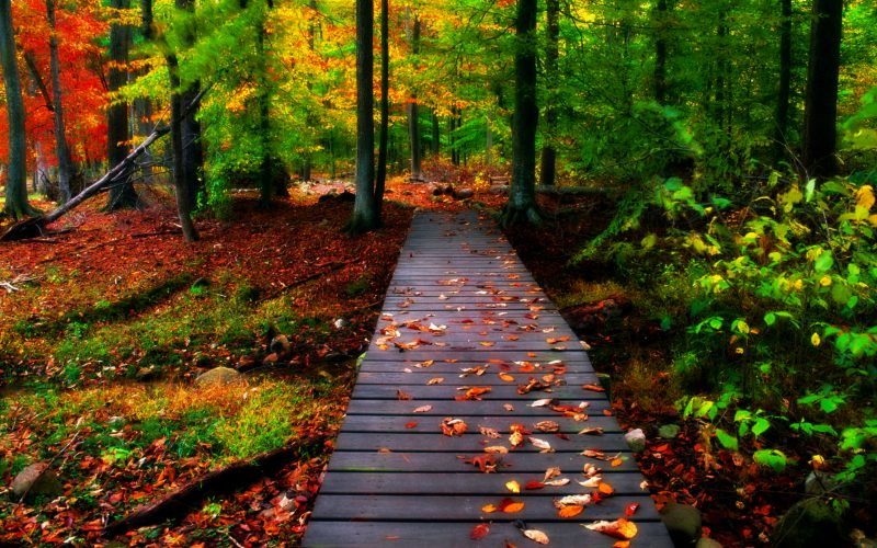 autumn-landscapes-wallpapers-hd
