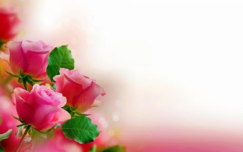 flores-wallpapers-43