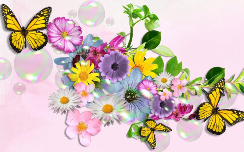 flores-wallpapers-9
