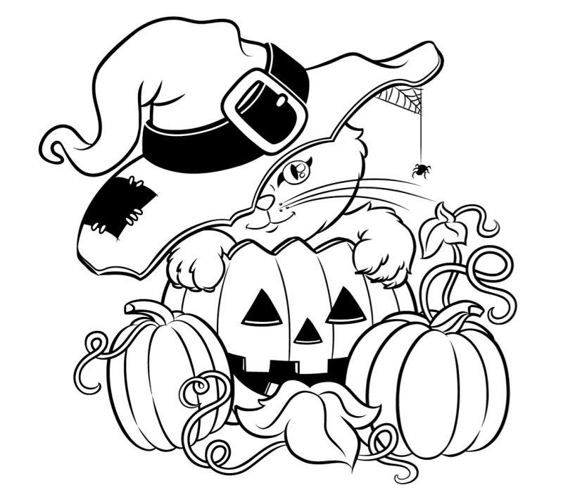 gato halloween