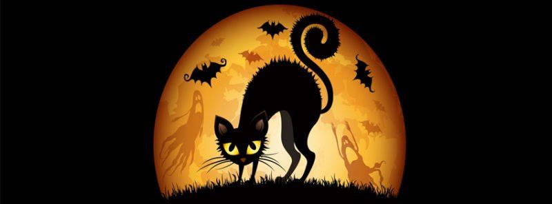 gato-y-luna-facebook-halloween