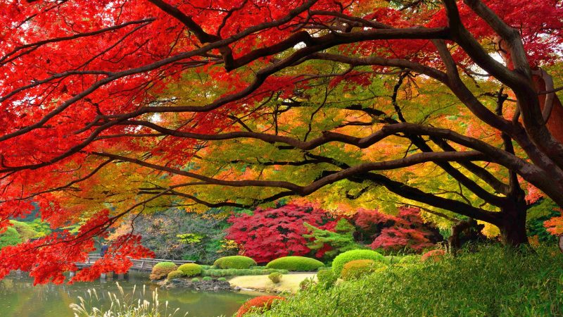 otono-paisajes-bonitos-fondos-hd