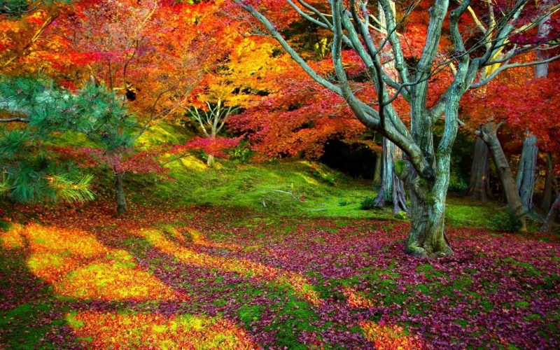 paisajes-otono-wallpapers-hd