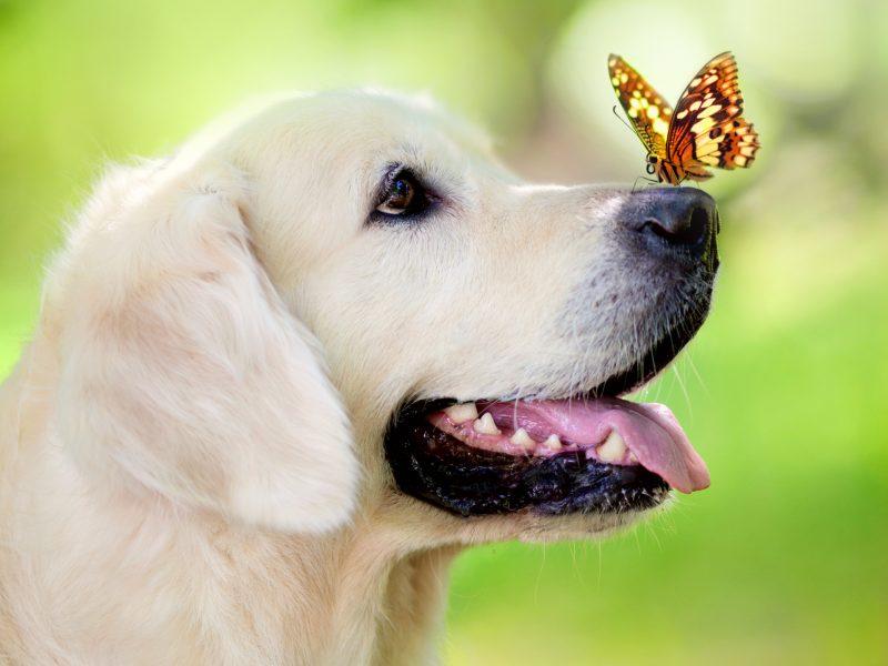 fondos-pantalla-perros-13
