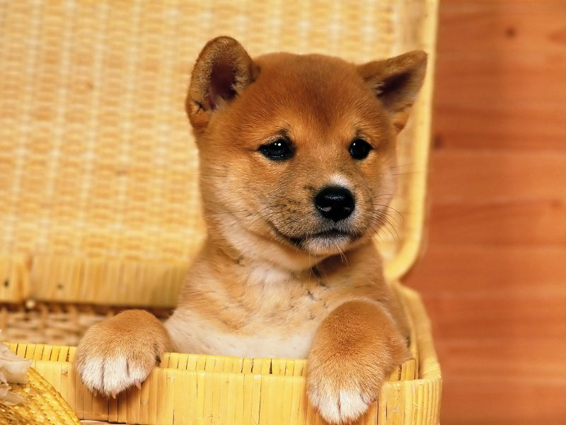 fondos-pantalla-perros-15