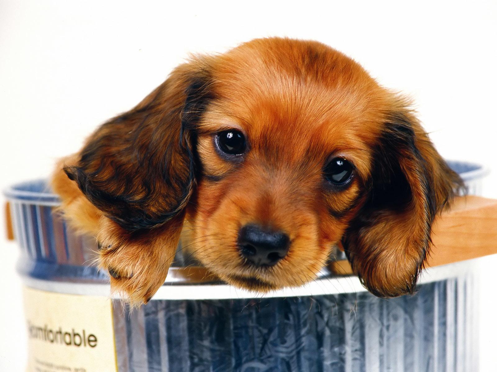 Fondos de pantalla de perros wallpapers hd for Fond ecran chiot
