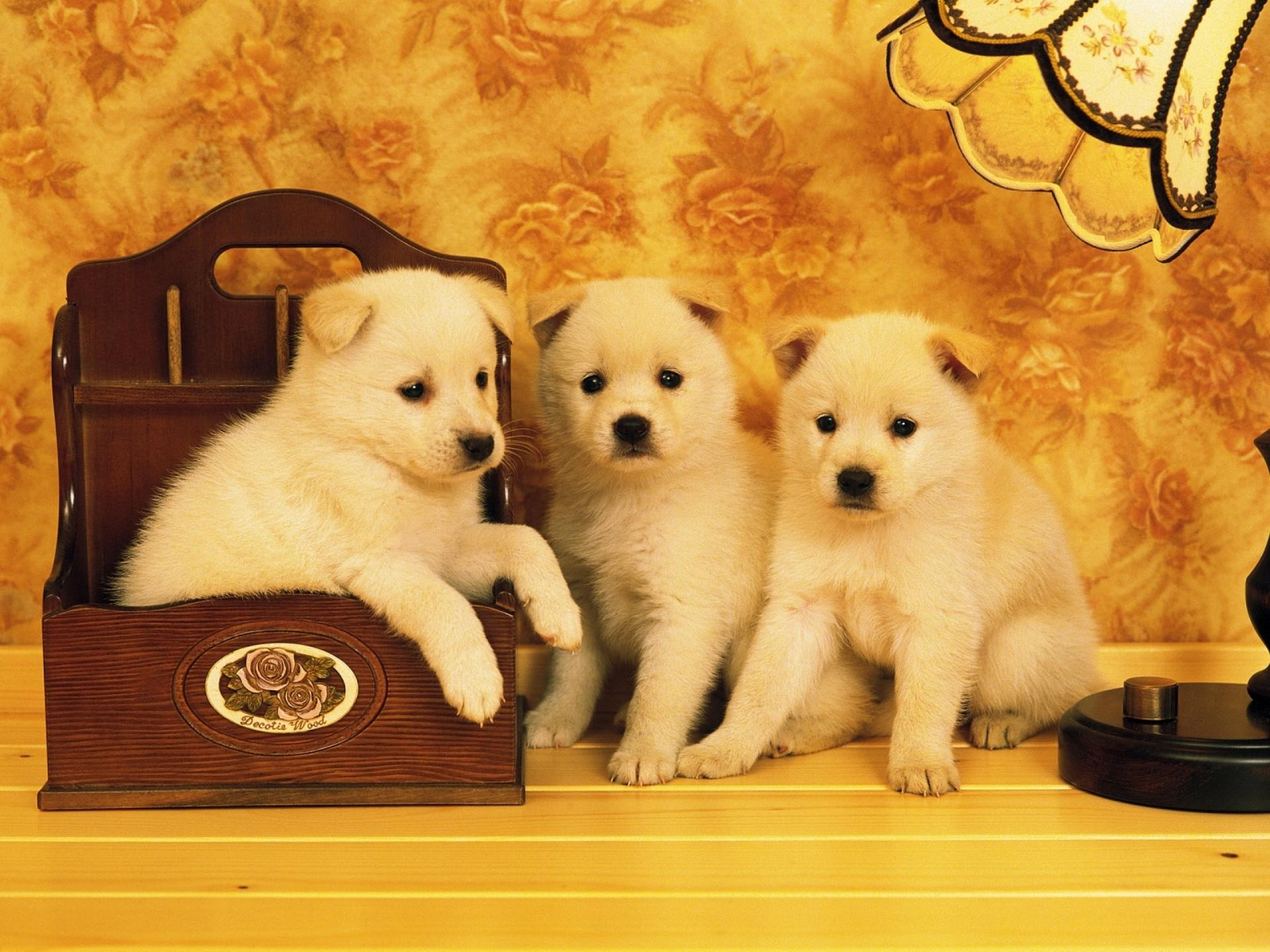 Imágenes De Animales En Hd Para Fondo De Pantalla: Fondos De Pantalla De Perros, Wallpapers HD