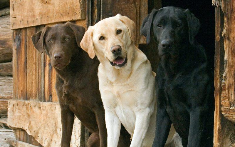 fondos-pantalla-perros-24