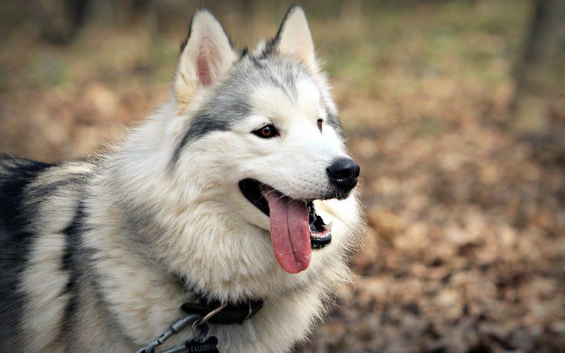 fondos-pantalla-perros-25
