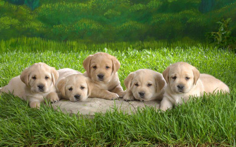 fondos-pantalla-perros-28
