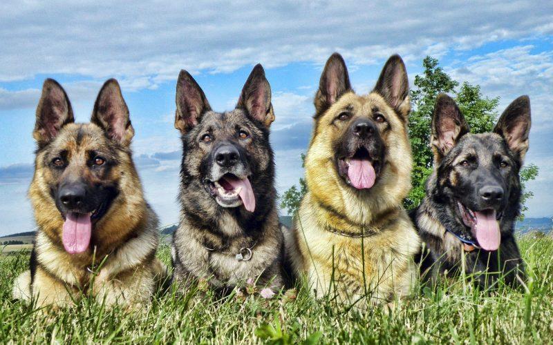 fondos-pantalla-perros-29