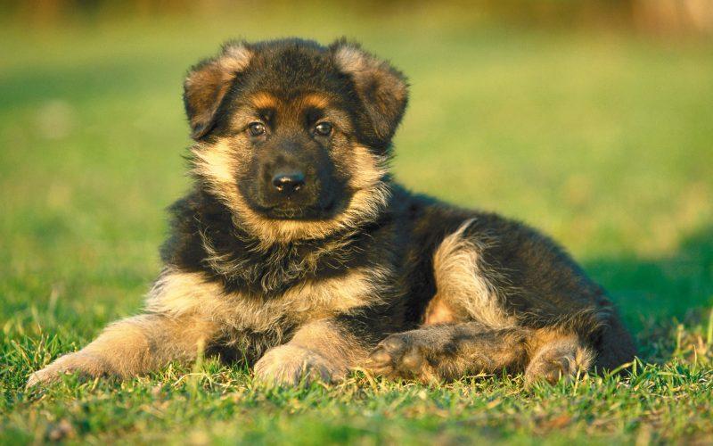 fondos-pantalla-perros-33