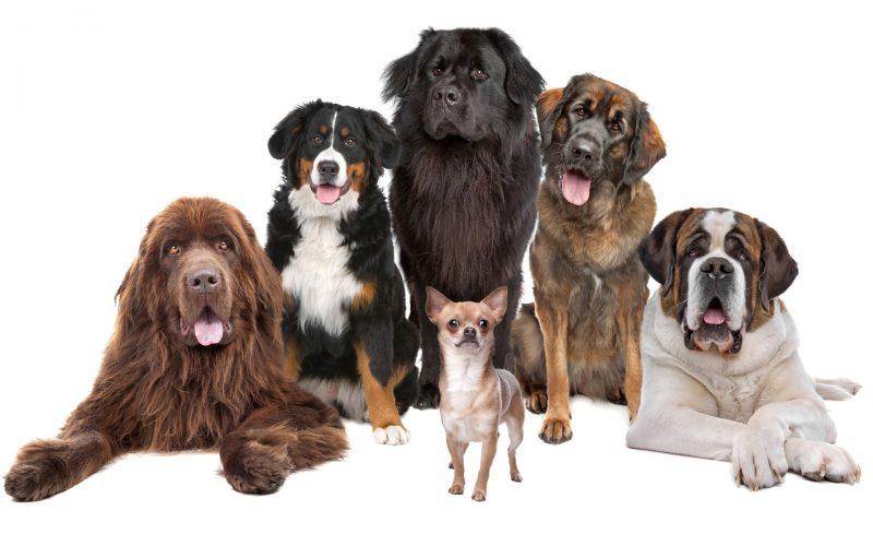 fondos-pantalla-perros-6