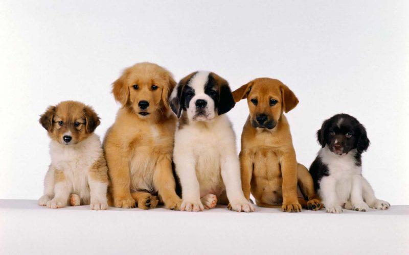fondos-pantalla-perros-8
