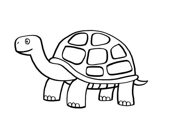 tortugas-para-colorear-1