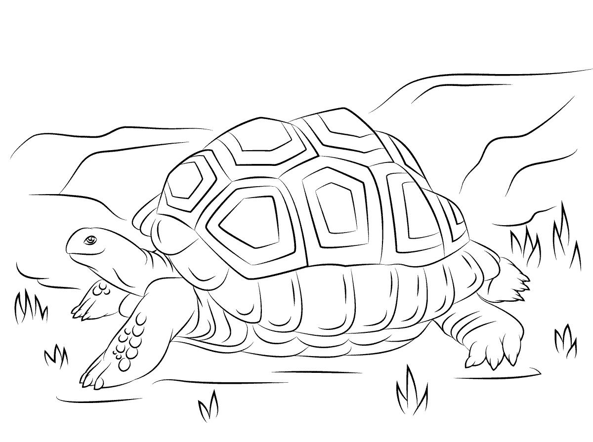 Imagenes Para Colorear E Imprimir: Dibujos De Tortugas Para Colorear E Imprimir