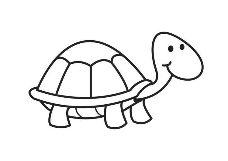 tortugas-para-colorear-4