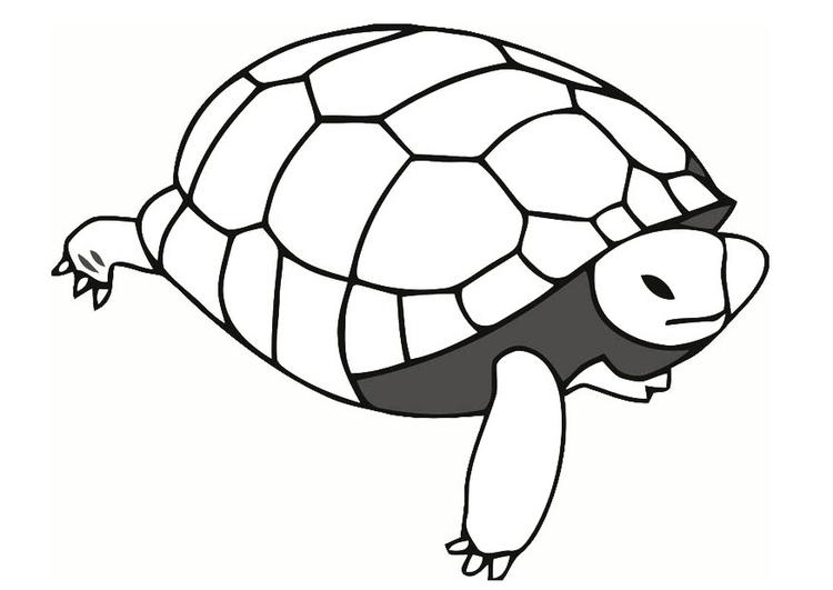 tortugas-para-colorear-5