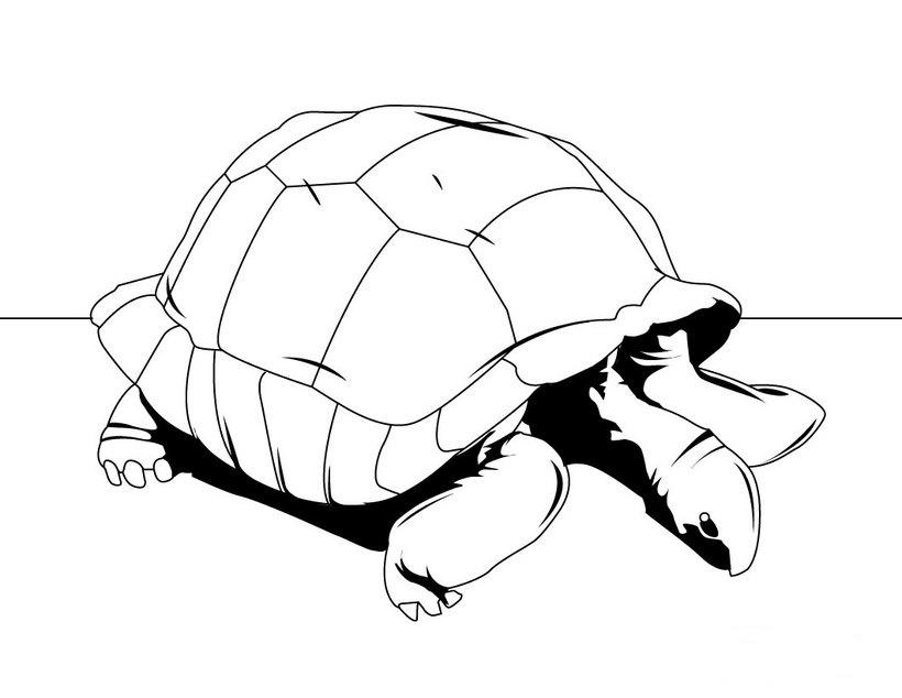 Dibujos de tortugas para colorear e imprimir - Dibujos para pintar en tejas ...