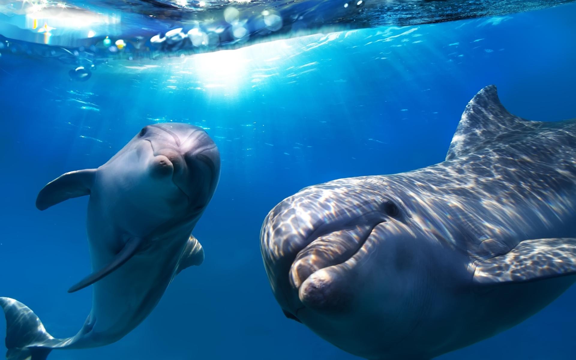 [Image: Delfines-Wallpapers-9.jpg]