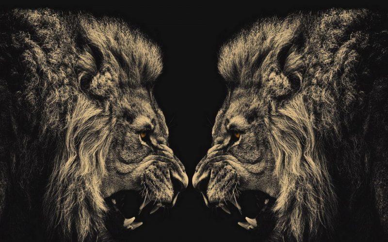 leones-wallpapers-18